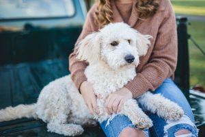 mascotas reducen estres ansiedad