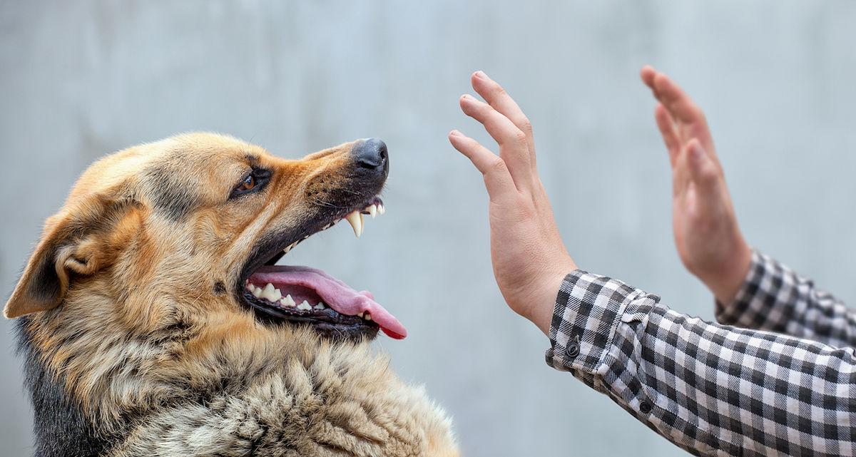 ¿Qué debemos hacer si nos ataca un perro?