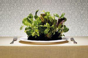sostenibilidad dieta