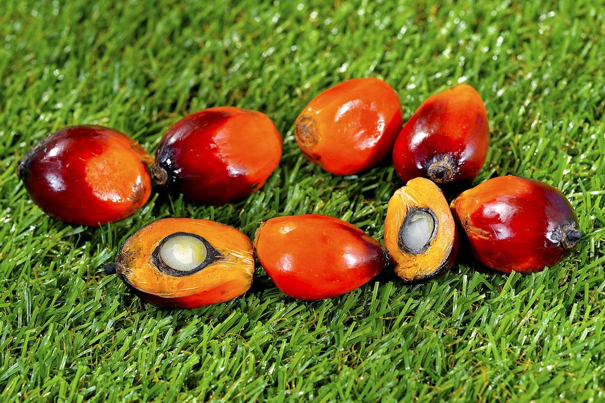aceite de palma es malo para la salud