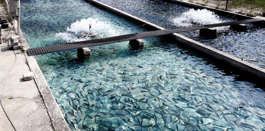 acuicultura y sostenibilidad medioambiental