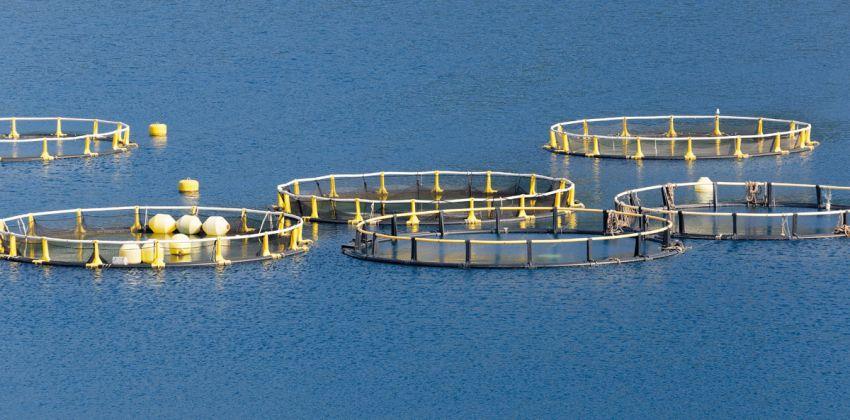 acuicultura tipo de granjas en España