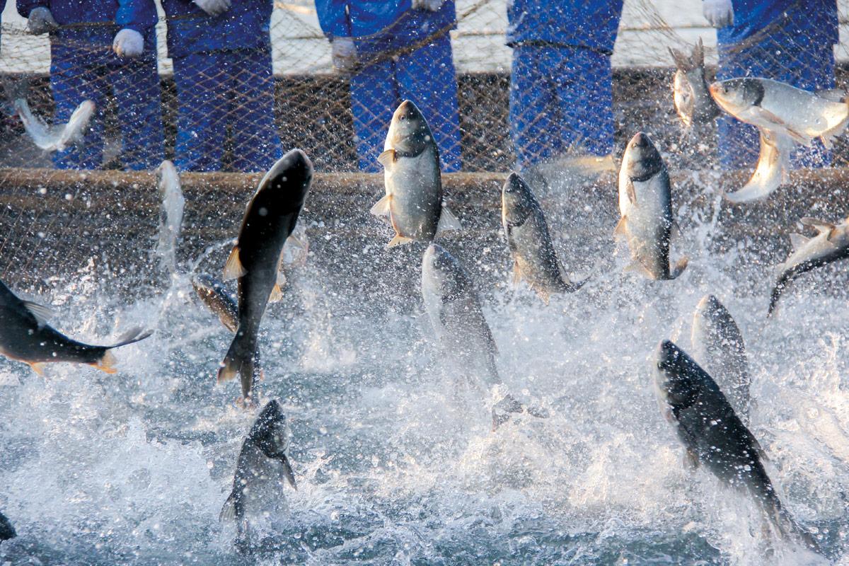 pescado de acuicultura y sostenibilidad