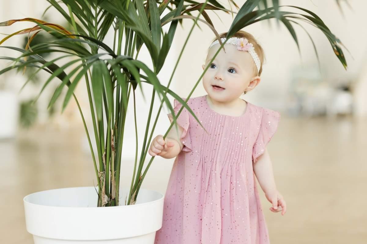 plantas peligrosas bebés