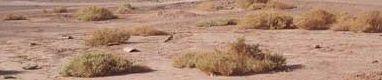 Desertificacion m