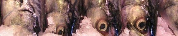 Pescadoazul gr