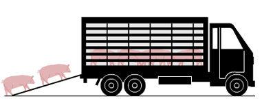 Info transporte animales