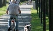 Abuelo bici mono