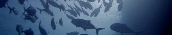Banco peces gr