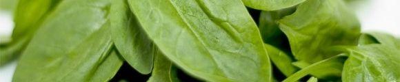 Espinaka gr-ak