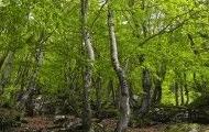 Bosques01 mon
