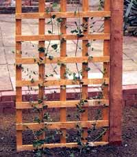 Vamos a poner una panel de celos a en el jard n eroski consumer - Paneles de madera para jardin ...