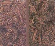 Variedades de mantillo eroski consumer for Mantillo o sustrato