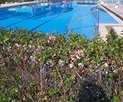 Un seto para bordear la piscina eroski consumer for Piscinas desmontables eroski
