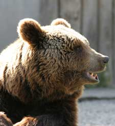 Videos animales salvajes apareandose - Videos animales salvajes apareandose ...