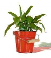 Combatir plagas y enfermedades en plantas de interior - Enfermedades de las plantas de interior ...