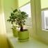 Combatir plagas y enfermedades en plantas de interior
