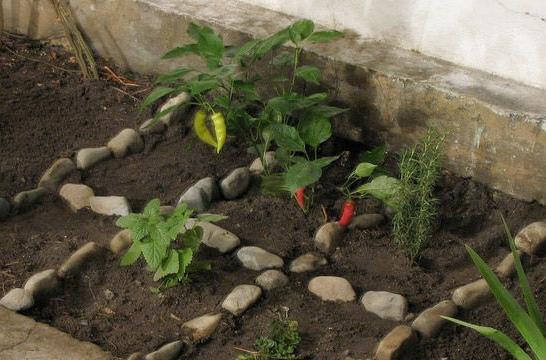 C mo cultivar un huerto en casa sin riesgos eroski consumer - Que plantar en el huerto ...