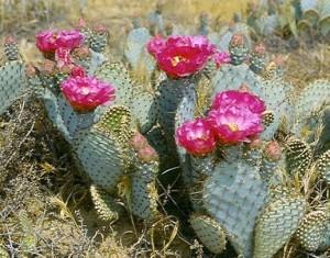 Cuidados necesarios de las plantas crasas eroski consumer for Cactus cuidados exterior