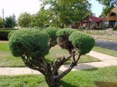 Rboles apropiados para jardines peque os eroski consumer - Arboles para jardines pequenos ...