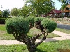Rboles apropiados para jardines peque os eroski consumer for Arboles de hoja perenne para jardin