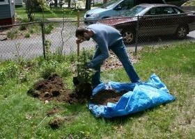 Rboles apropiados para jardines peque os eroski consumer for Arboles decorativos para jardines pequenos