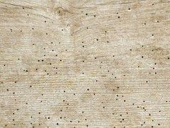 Polillas y algavaros enemigos de la madera eroski consumer for Polilla madera imagenes