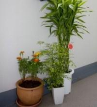 Elegir las plantas m s apropiadas para patios interiores - Plantas para patios interiores ...