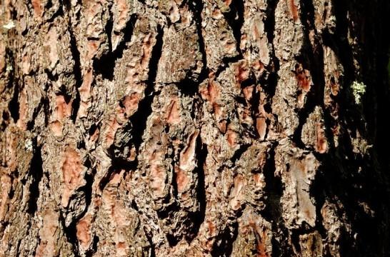 Corteza de pino en el suelo del jard n eroski consumer - Corteza de pino ...