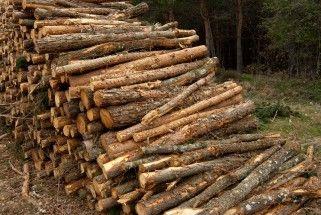 Cu ndo utilizar madera de pino eroski consumer - Madera de pino para exterior ...
