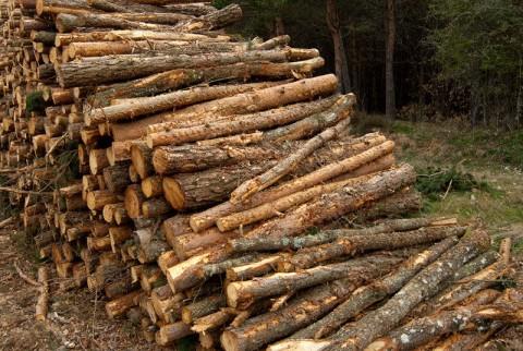 Deforestaci n eroski consumer - Madera de pino ...