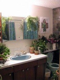 Plantas en el cuarto de ba o eroski consumer - Plantas en el bano ...