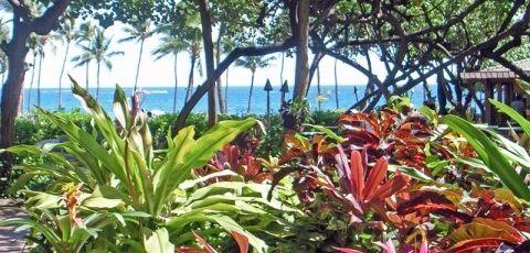 Jardines costeros eroski consumer for Ejemplos de jardines