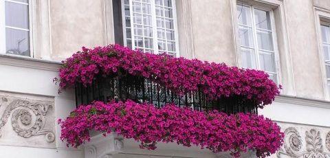Terrazas y balcones en flor eroski consumer - Plantas para terraza con mucho sol ...
