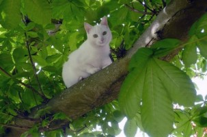 Hierba gatera para gatos