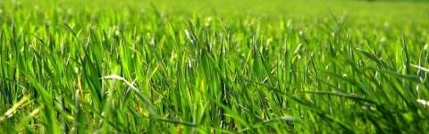 C mo plantar el c sped en el jard n eroski consumer for Como plantar cesped natural
