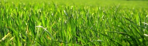 C mo plantar el c sped en el jard n eroski consumer - Plantar cesped natural ...