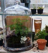 El Cultivo En Terrarios Eroski Consumer - Terrario-para-plantas