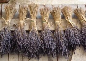 Confeccionar Un Ramo De Flores Secas Eroski Consumer - Plantas-secas-decoracion