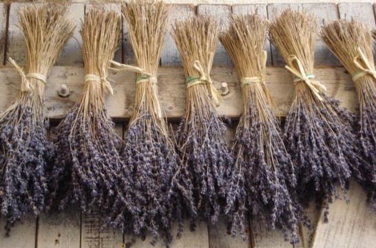 Confeccionar un ramo de flores secas eroski consumer - Plantas secas decoracion ...