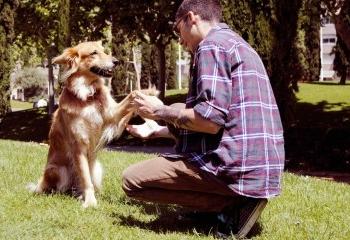 Adopte un perro callejero y llora mucho