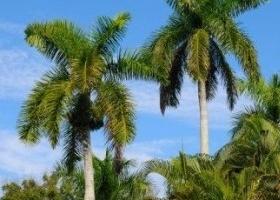Inverconca cuidados de las palmeras en el hogar for Iluminacion para palmeras