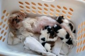 7ff674e82 Mi perra está de parto  ¿cómo puedo ayudar