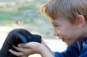 ¿Estás preparado para tener un perro?
