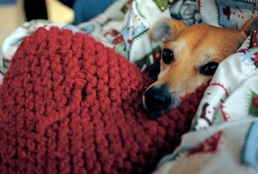 Perro resfriado