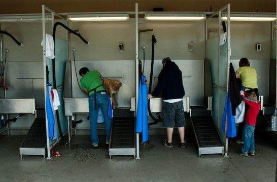 El baño del perro 34fe46eb8c5e