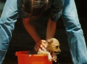 C mo ba ar a un perro que odia el agua eroski consumer - Como banar a un perro ...
