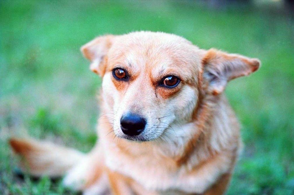 La eutanasia del perro claves eroski consumer - Es malo banar mucho a los perros ...