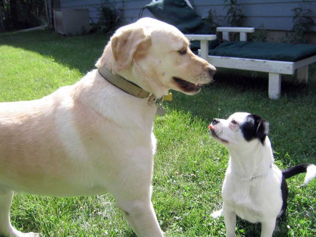 Varios perros en casa c mo conseguir una buena convivencia eroski consumer - Perros para tener en casa ...