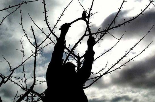 C mo y por qu podar los rboles frutales eroski consumer - Como cuidar los arboles frutales ...